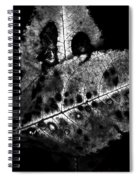 Fall Color In Black And White Spiral Notebook