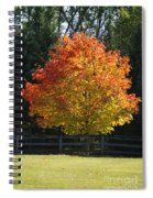 Fall Colored Tree Spiral Notebook