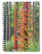 Fall Ivy On The Trees Spiral Notebook