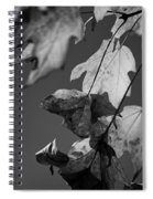 Fall Leaf Light Spiral Notebook