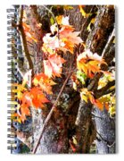 Fall Leaves 2 Spiral Notebook