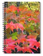 Fall Leaves Filtered Spiral Notebook