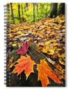 Fall Leaves In Forest Spiral Notebook