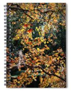 Fall Leaves Over Florida Pond Spiral Notebook