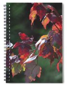 Fall Red Spiral Notebook