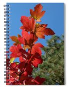Fall Snowball Branch Spiral Notebook