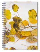 Fallen Autumn Aspen Leaves Spiral Notebook