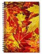 Fallen Autumn Maple Leaves  Spiral Notebook