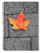 Fallen Leaf  Spiral Notebook