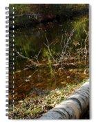 Fallen Tree Path Spiral Notebook