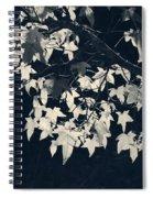 Falling Stars Spiral Notebook