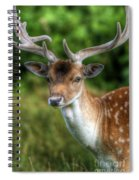 Fallow Deer Spiral Notebook
