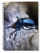 False Darkling Beetle 30 Spiral Notebook