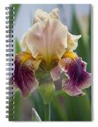 Fancy Iris Dance Ruffles Spiral Notebook
