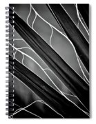 Fanned Leaves Spiral Notebook