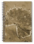 Faux Fossil Spiral Notebook