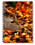 Fawn In Autumn Spiral Notebook