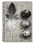 Feather And Three Eggs Spiral Notebook