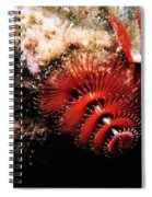 Feather Duster Feeding 2 Spiral Notebook