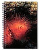 Feather Duster Feeding 4 Spiral Notebook