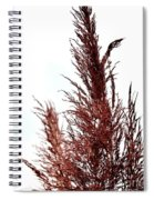 Feather Top Spiral Notebook