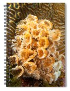 Featherduster Spiral Notebook