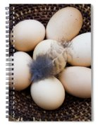 Feathered Eggs Spiral Notebook