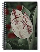 Feathered Markings Spiral Notebook