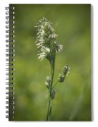 Feathery Reed Canary Grass Vignette Spiral Notebook