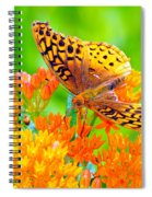 Feeding Butterfly Spiral Notebook