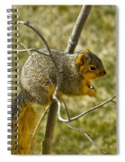 Feeding Tree Squirrel Spiral Notebook