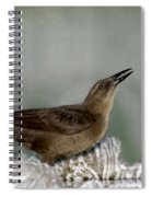 Female Boat Tailed Grackle Spiral Notebook