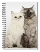 Female Cats Spiral Notebook