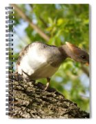 Female Hooded Merganser Spiral Notebook