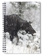 Female Moose In Snowy Forest, Gaspesie Spiral Notebook