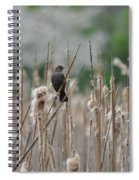 Female Redwinged Blackbird Spiral Notebook