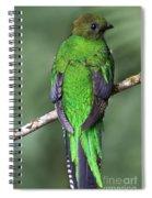 Female Resplendent Quetzal - Dp Spiral Notebook