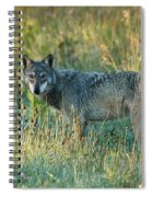 Femle Gray Wolf In The Morning Light Spiral Notebook