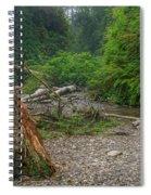 Fern Canyon Trunk Spiral Notebook
