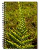 Fern Frond And Sporangia 1 Spiral Notebook