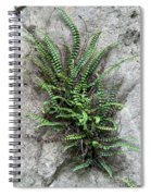 Fern Growing From Crack In Limestone Spiral Notebook