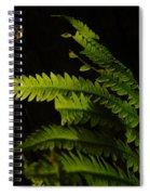 Fern Seeking Dawn Light Spiral Notebook