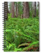 Ferns And Redwoods Spiral Notebook