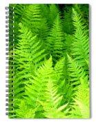 Ferns Galore Filtered Spiral Notebook