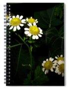 Feverfew In Bloom Spiral Notebook