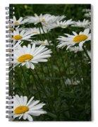Field Daisies Spiral Notebook