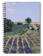 Field Of Lavender. Sault. Vaucluse Spiral Notebook