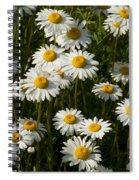 Field Of Oxeye Daisy Wildflowers Spiral Notebook
