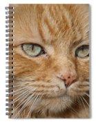 Fierce Warrior Kitty Spiral Notebook
