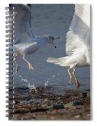Fighting Gulls Spiral Notebook